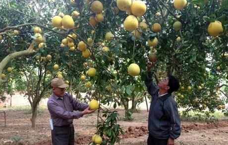 Les cooperatives et agriculteurs exemplaires du pays sur le devant de la scene hinh anh 1