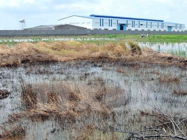 L'Allemagne partage ses experiences en matiere de depollution des sols contamines aux metaux lourds hinh anh 1