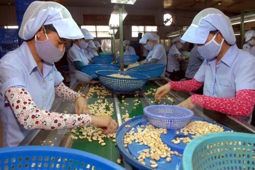 Record d'exportations de noix de cajou en 2016 hinh anh 1