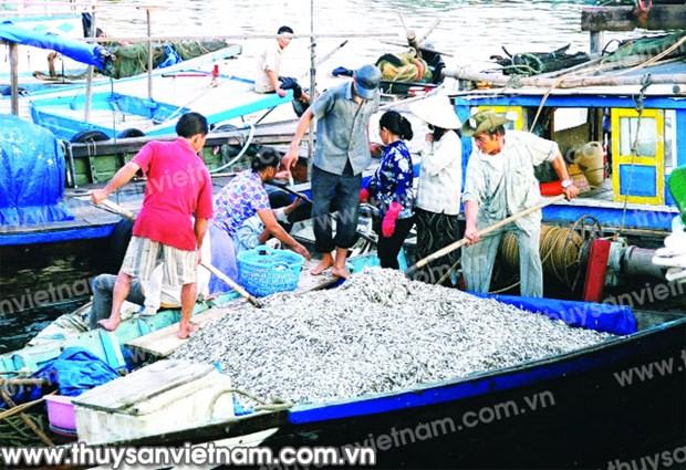 Nghe An : mesures de protection des ressources halieutiques hinh anh 1