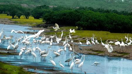 Parc national de Xuan Thuy : la ou l'oiseau se pose hinh anh 1