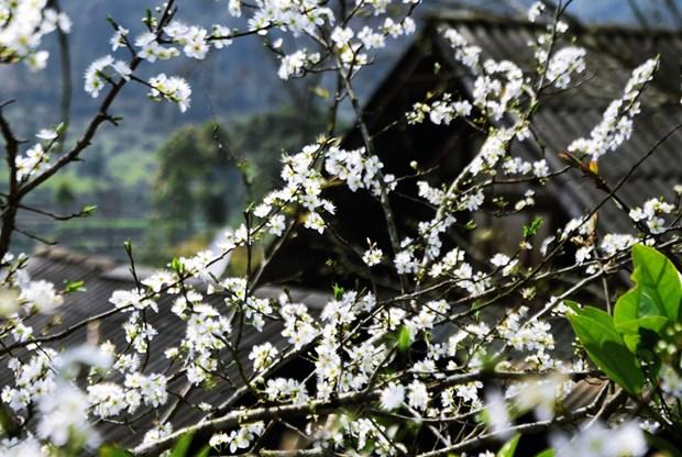 Rendez-vous a la 5e fete de la fleur de bauhinie 2017 a Dien Bien hinh anh 1