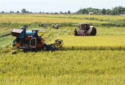 La restructuration de l'economie vietnamienne est indispensable, selon la BM hinh anh 2