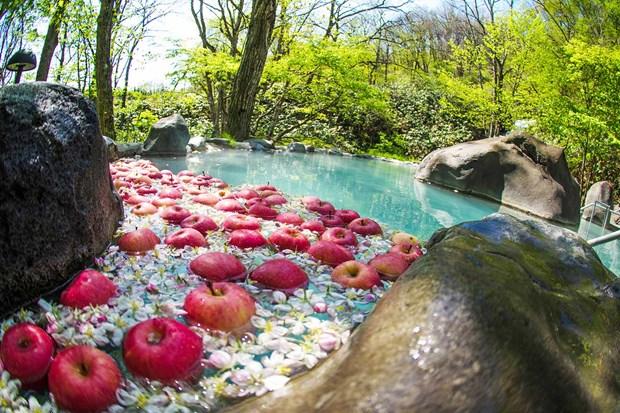 Des pommes japonaises Aomori arrivent au Vietnam hinh anh 1