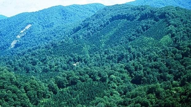 Objectif d'un taux de couverture forestiere de 47,25% en 2017 hinh anh 1