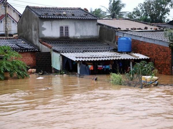 Le PM decide d'octroyer 2.000 tonnes de riz aux sinistres de Binh Dinh hinh anh 1