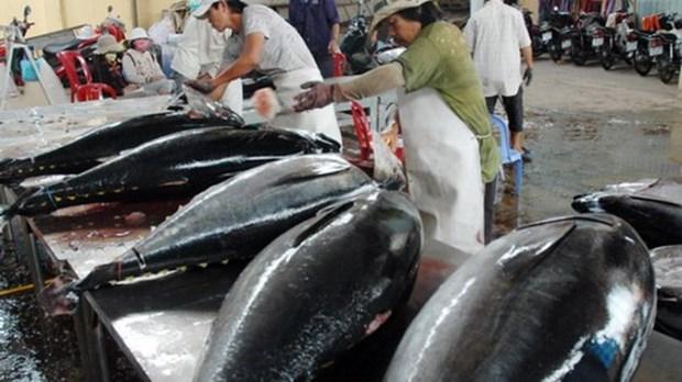 Les Etats-Unis augmentent leurs importations de thon vietnamien hinh anh 1
