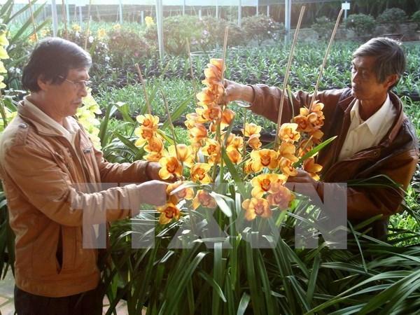 Da Lat decide de fonder un centre de commerce des fleurs hinh anh 1
