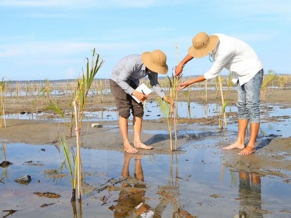 Le Vietnam au coeur de la cooperation environnementale de l'ASEAN hinh anh 1