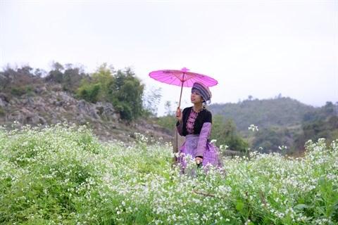 Les fleurs «oubliees» font leur retour hinh anh 1