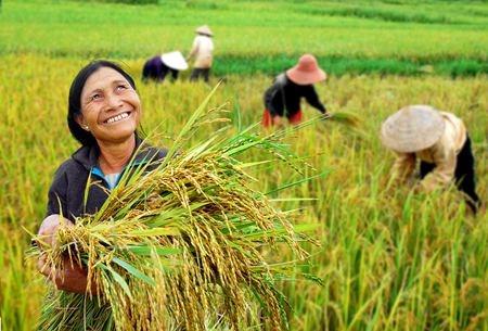 Developper la recherche sur le riz en Asie du Sud-Est hinh anh 1