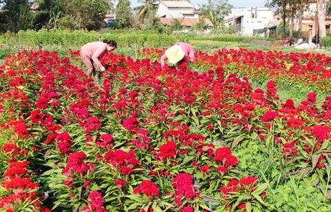 Les fleurs et leur histoire hinh anh 2