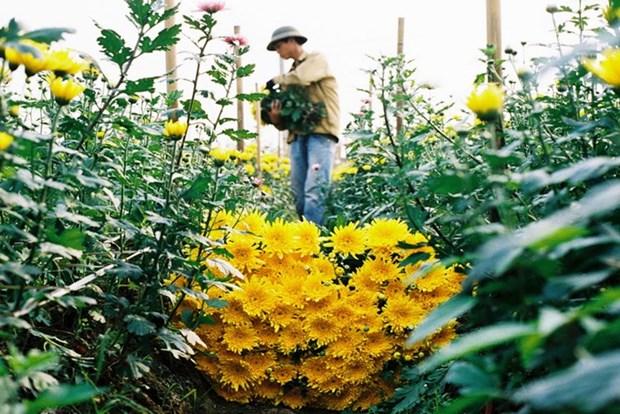 Les fleurs et leur histoire hinh anh 3