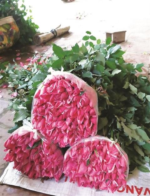 Au village de Tay Tuu, la fleur est reine hinh anh 3