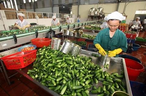 Les exportations vegetales en pleine croissance hinh anh 1