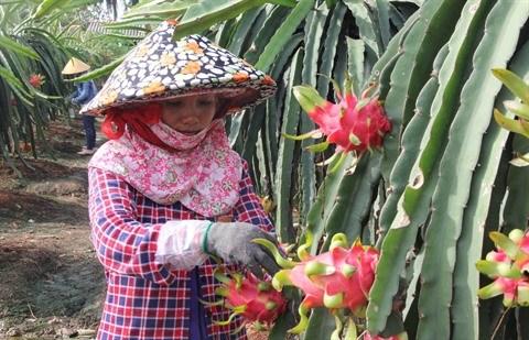 Les exportations vegetales en pleine croissance hinh anh 2