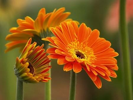 Quelles plantes allez-vous choisir pour le Tet ? hinh anh 5
