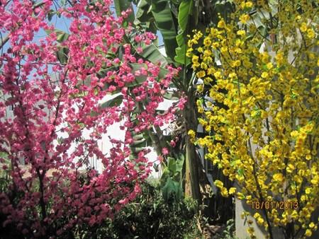 Le Tet Traditionnel et les tabous des Vietnamiens hinh anh 2