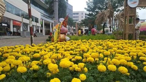 Des foires printanieres aux fleurs a Ho Chi Minh-Ville hinh anh 2
