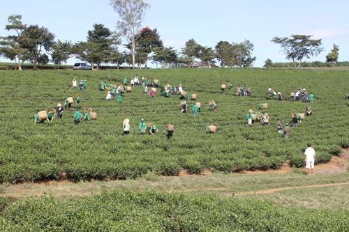 Formation professionnelle pour 1,4 million de travailleurs ruraux hinh anh 1