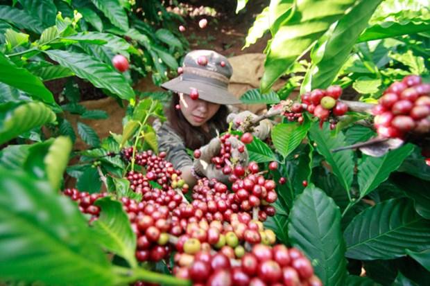 L'Algerie, 4e importateur africain de produits vietnamiens hinh anh 1