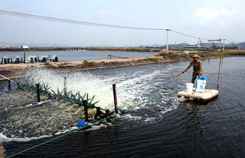 Quang Ninh : l'economie du district de Hoanh Bo en pleine mutation hinh anh 2