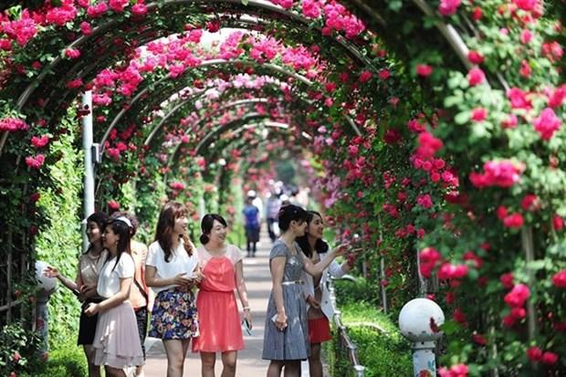 Bientot la Fete des roses de la Bulgarie a Hanoi hinh anh 1