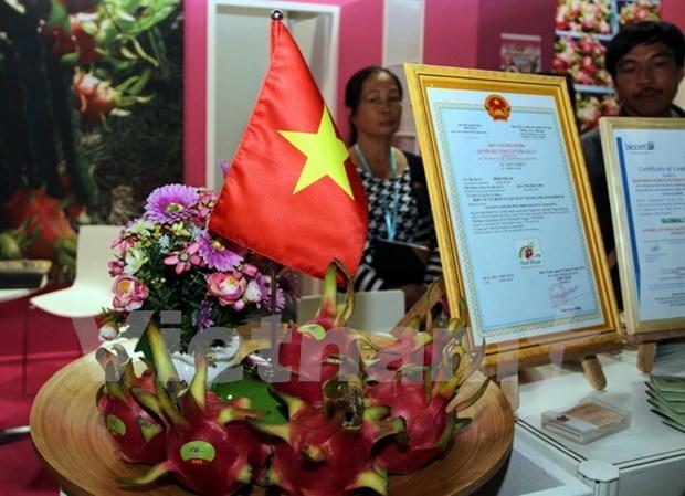 Des fruits du dragon du Vietnam presentes au Fruit Logistica 2017 a Berlin hinh anh 1