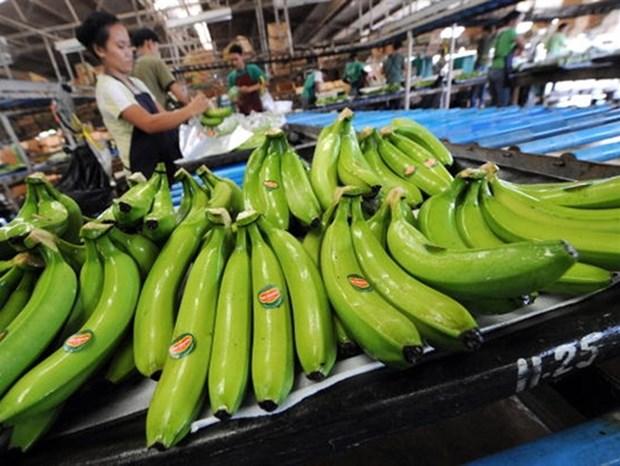 Les bananes vietnamiennes de plus en plus appreciees dans le monde hinh anh 1