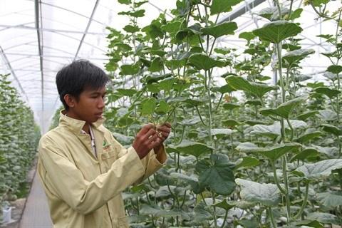 Bientot le Festival international de l'agriculture du delta du Mekong a Can Tho hinh anh 1
