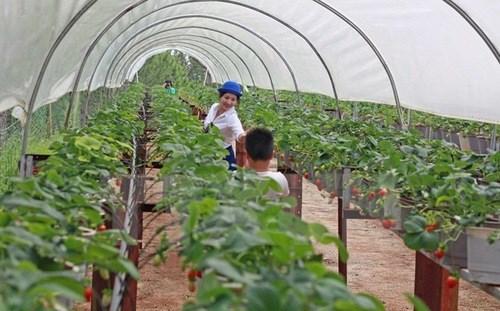 Vietnam, l'un des grands sites pour les investisseurs indiens hinh anh 1
