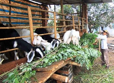 Plus de 900.000 travailleurs ruraux seront formes de 2017 a 2020 hinh anh 2
