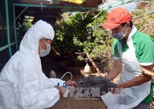 Surveillance renforcee pour detecter precocement les cas de grippe aviaire sur les etres humains hinh anh 1