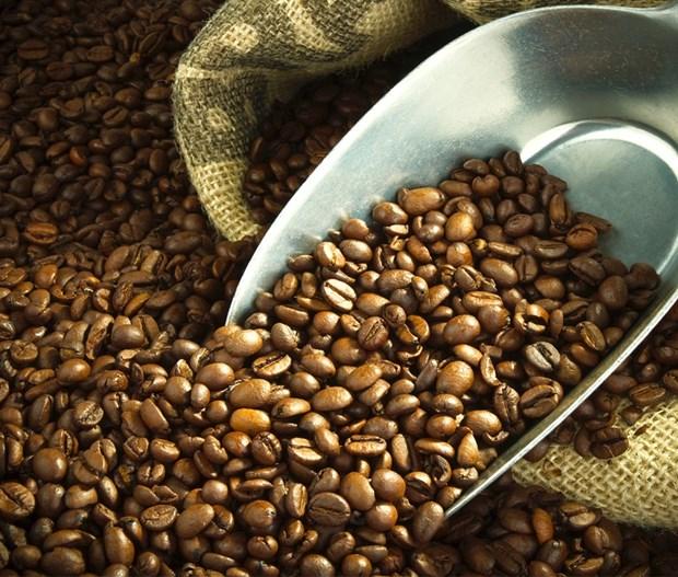 Le Bresil importe du cafe vietnamien pour la premiere fois de son histoire hinh anh 1