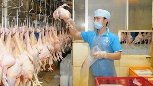 Dong Nai : les eleveurs commencent a exporter leurs poulets au Japon hinh anh 1
