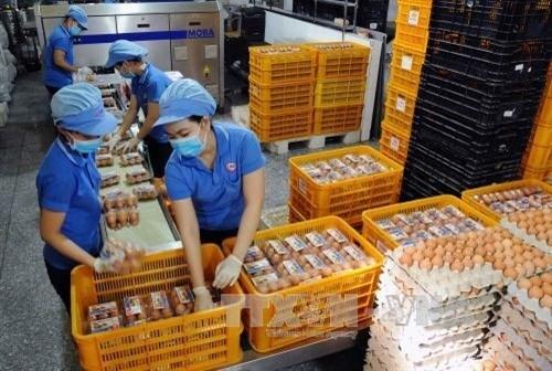Phu Tho : inauguration d'une usine de production d'œufs de poule bio hinh anh 1