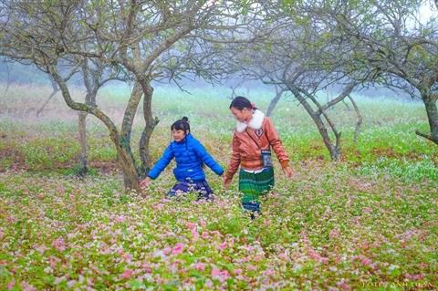 Moc Chau en saison des fleurs hinh anh 2
