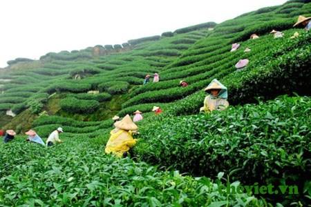 The : 20.000 agriculteurs participeront a un partenariat public-prive pour une production durable hinh anh 1
