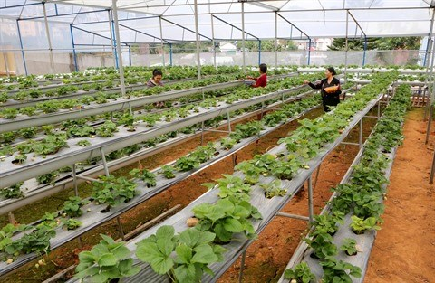 Pham Cong Chinh ou l'incarnation de l'agriculteur 2.0 hinh anh 2