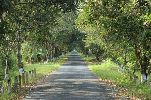 Un grand bol de nature a U Minh Ha hinh anh 2