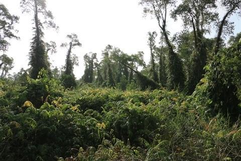 Un grand bol de nature a U Minh Ha hinh anh 3