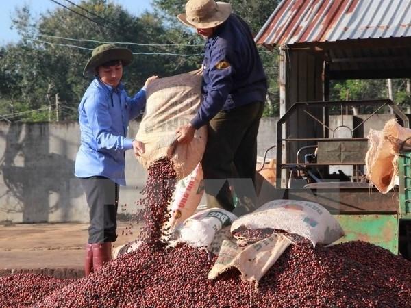 La province de Dak Lak promeut son cafe produit sous l'IG de «Buon Me Thuot» a l'internationale hinh anh 1