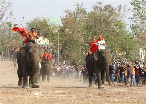 Un Neerlandais au chevet des derniers elephants vietnamiens hinh anh 1
