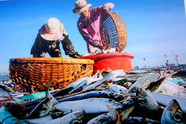 Les realisations socio-economiques de la province de Quang Nam en images hinh anh 5