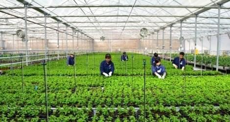 Le plan d'amenagement general de la zone agricole de haute technologie de Phu Yen ratifie hinh anh 1