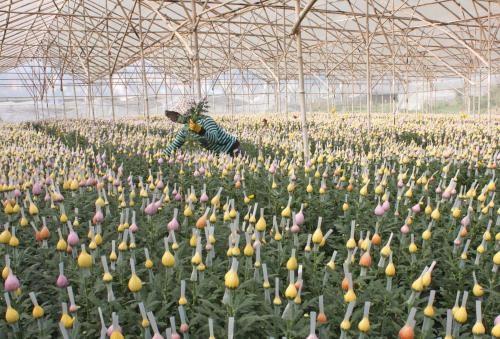 Kawasaki Flora Auction Market veut investir dans la floriculture a Lam Dong hinh anh 1