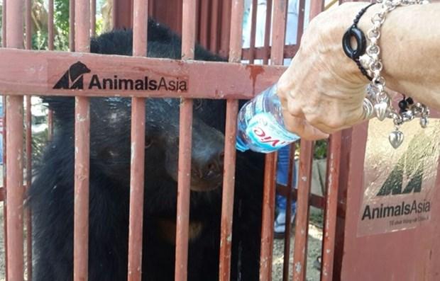 Animals Asia recueille deux nouveaux ours hinh anh 1