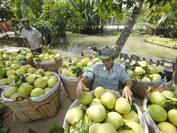 1er trimestre : les exportations vietnamiennes de fruits et legumes sur leur lancee hinh anh 1