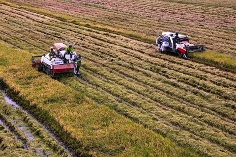 Avenir de la chaine d'approvisionnement agricole du delta du Mekong hinh anh 1