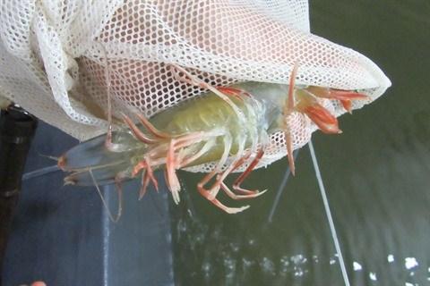 Aquaculture : Plus de 100 milliards de dongs pour controler les epidemies hinh anh 1